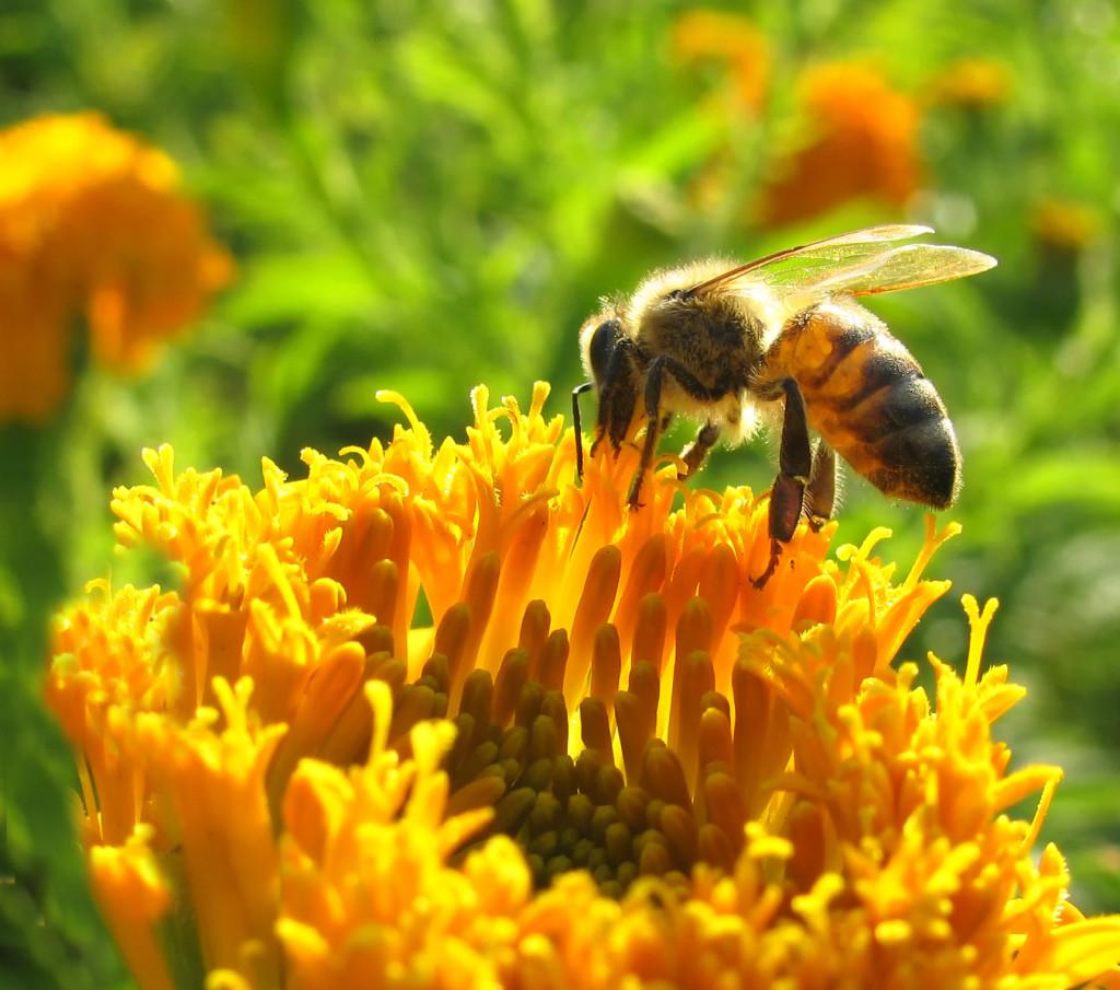 4_Bee蜜蜂