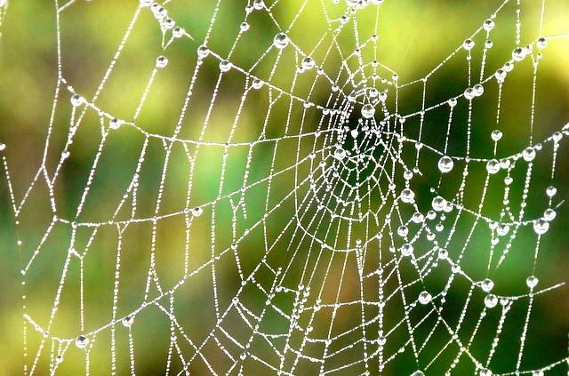 9_蜘蛛網